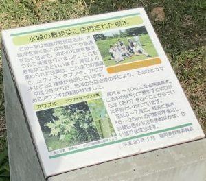 水城の敷粗朶に使用された樹木